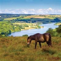 Ilfracombe & North Devon Coast
