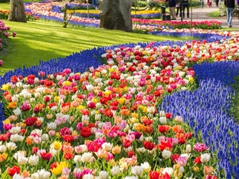 Keukenhof in Bloom