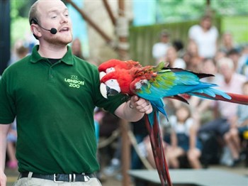 A handler with a colourful parrot