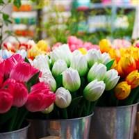 Tulips & Chocolates Cruise