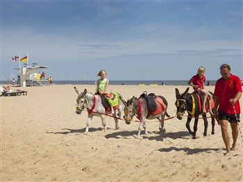 Donkeys walking on Gt Yarmouth beach