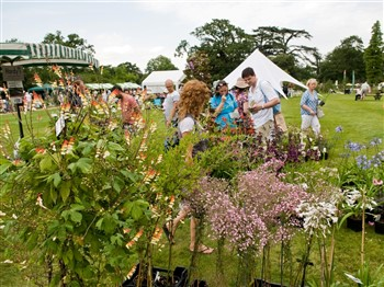 People at a flower show
