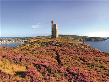 A view of the heather across the Isle of Man