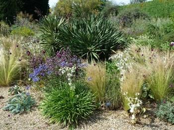 A view of a garden