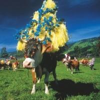 Treats of the Tyrol