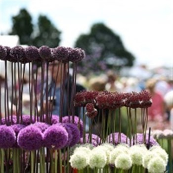 Hyde Hall Flower Show