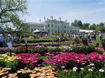 Hyland House with flower show in the grounds