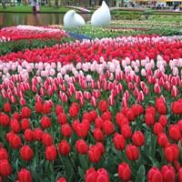 Keukenhof Gardens, Flower Parade & Volendam