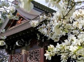 Kew Gardens - Japan Festival