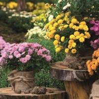 Malvern Flower Show