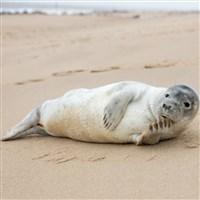 Norfolk Seals & Coast