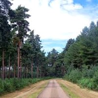 Family Great Escape - Thetford Forest