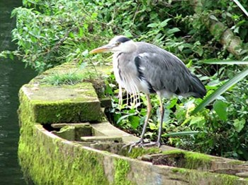 Bird on riverbank