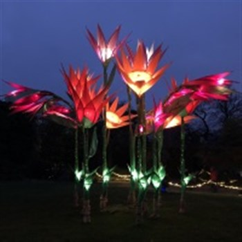 Wisley Gardens Christmas Glow with Festive Tea